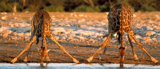 Hlulhuwe Umfolozi Game Reserve
