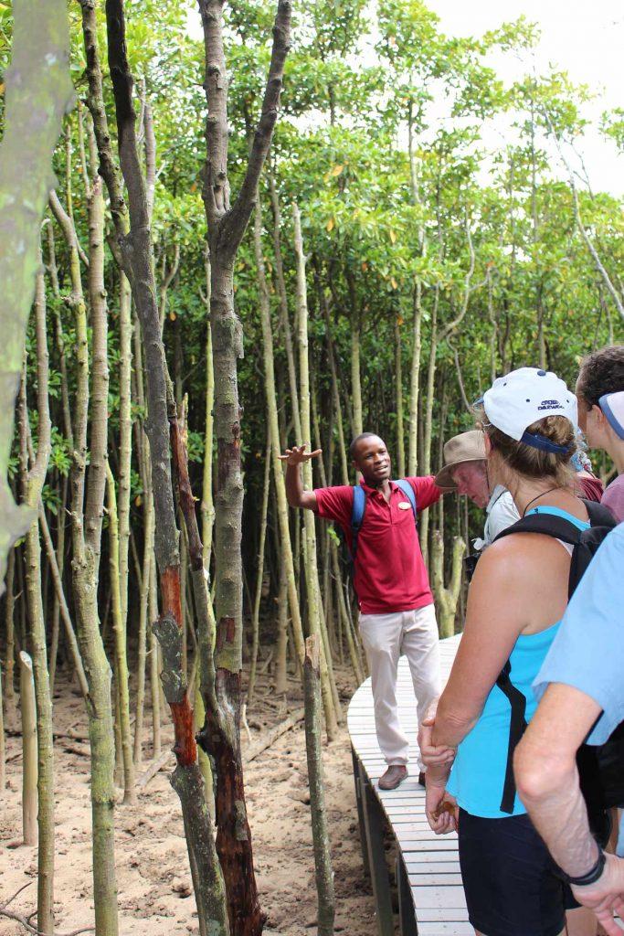 Black mangrove beachwood mangroves shothole borer