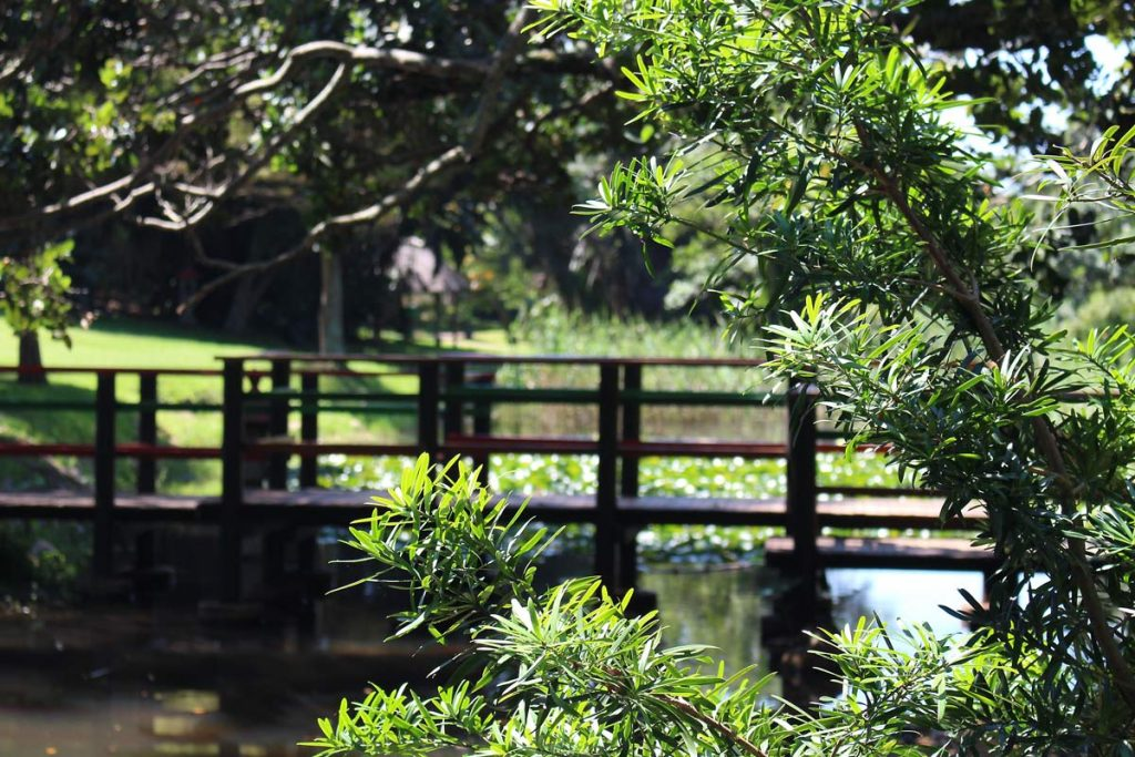 Durban North Japanese Gardens brige and trees