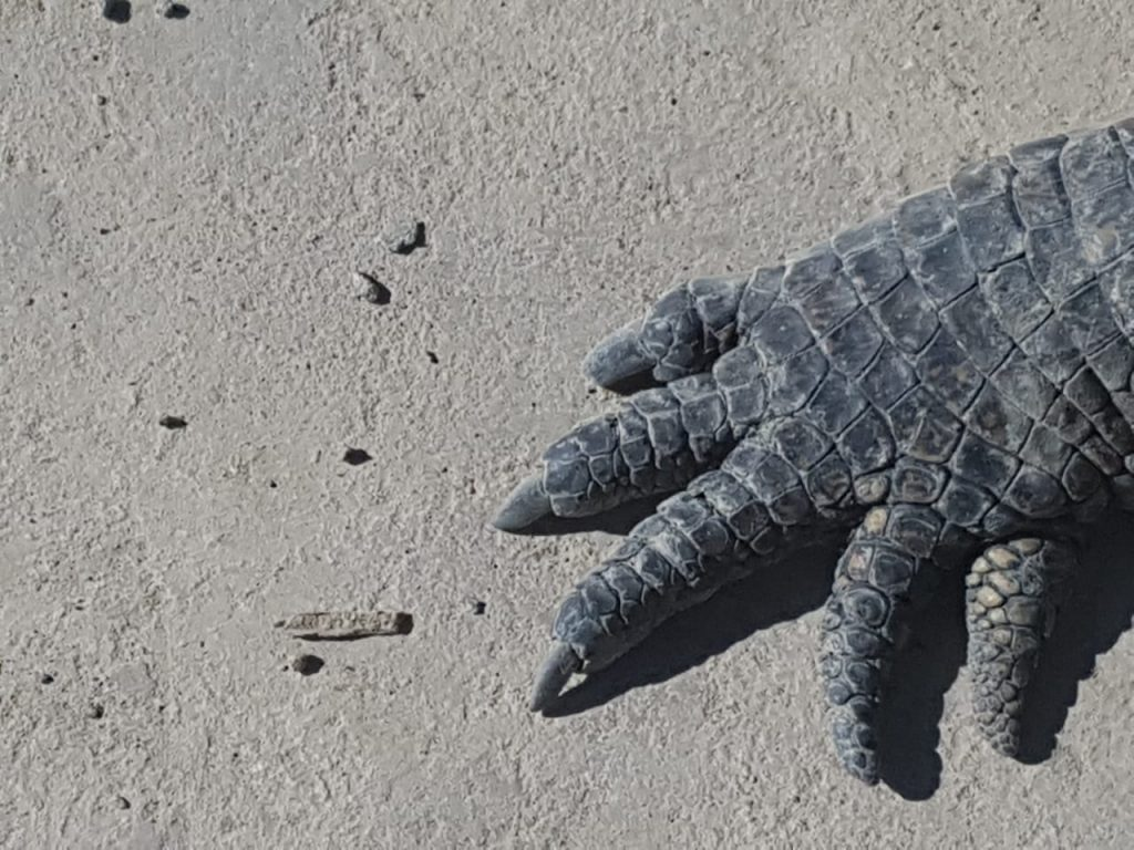 Crocodile Creek foot front