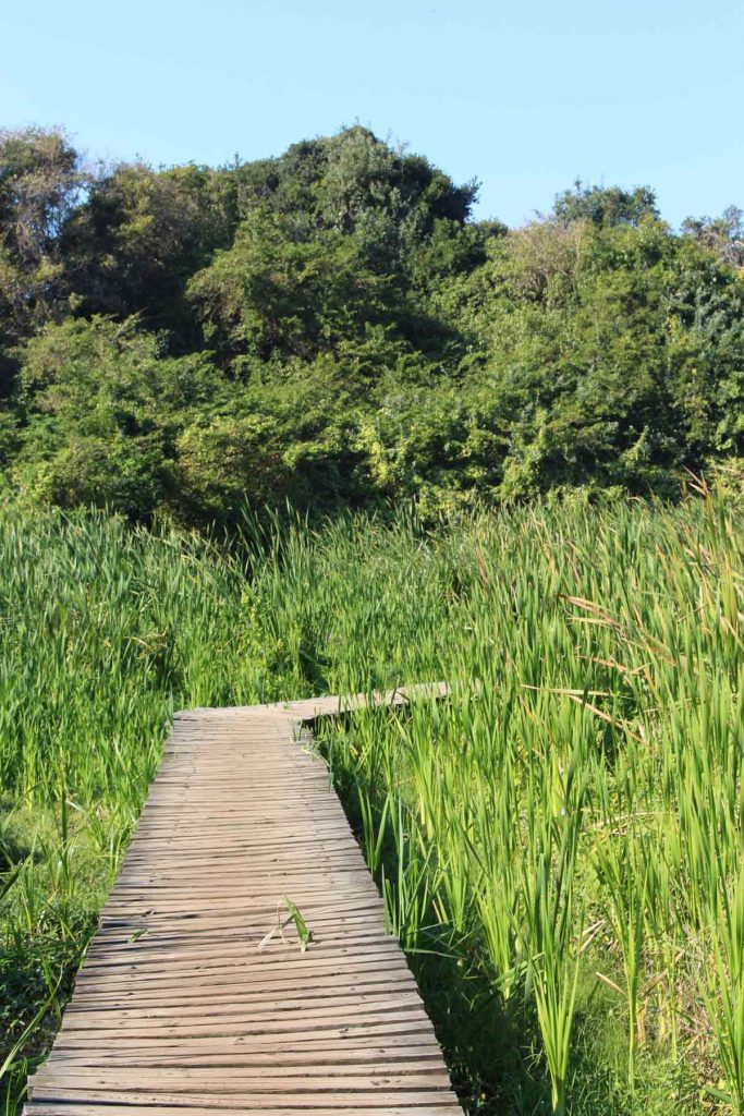 Umhlanga Lagoon Nature Reserve boardwalk and reeds